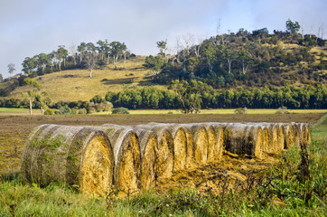 Arranged hay bales in rural setting, Tasmania, Australia