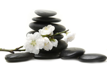 branch of cherry blossom with stacked stones