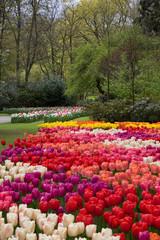 Distesa di fiori al parco