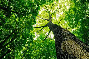forest © vovan