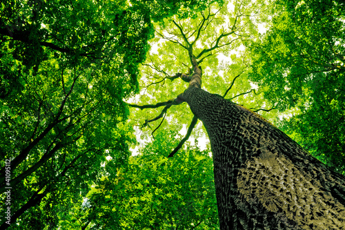 forest 41095112