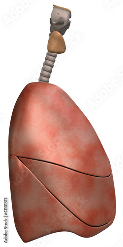 Lungs Side View