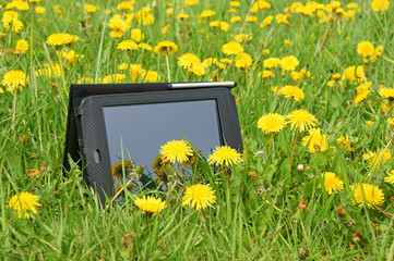Summer meadow and Tablet PC