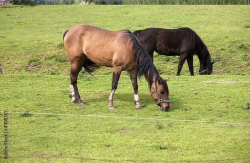 Horses grazing.
