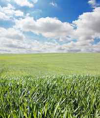 Hierba y cielo con nubes