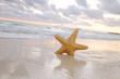 sea star starfish on beach, blue sea and sunrise time, shallow d