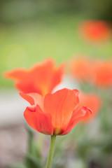 Frühlingsschönheiten