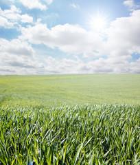 Hierba y cielo con sol y nubes