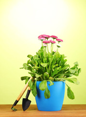 Pink flowers in pot with instruments