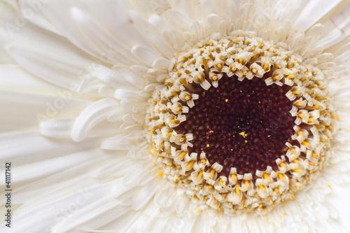 Flor de pétalos blancos