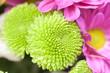 Fondo de flores verdes y rosas