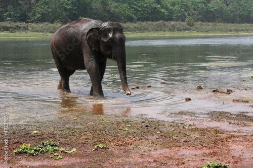 Un éléphant sort de la rivière