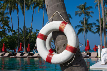 Lifebuoy hanging on a palm tree, Thailand.