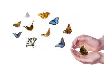 pittoresco volo di farfalle