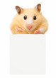 Hamster hold empty white poster