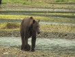 Zwei große Küstenbraunbären wildlife Katmai/Alaska