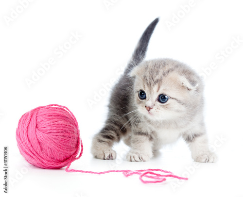 british baby cat playing red clew or ball on white