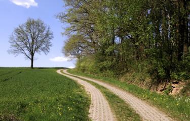 Weg im Mai druch Feld und Flur