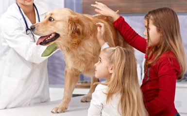 Little sisters and dog at veterinary surgeon