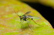 jungle horsefly