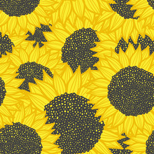 color seamless sunflower pattern. Vector illustration