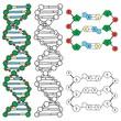 DNA - helix molecule model