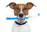 Fototapety dog with electric toothbrush