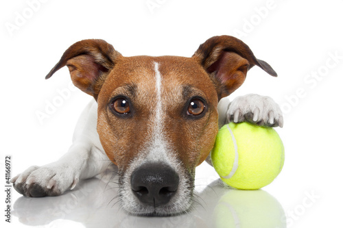 Poster dog with tennis ball