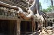 Raíces en el templo de Ta Prohm. Angkor. Camboya