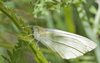 mariposa sobre hierba