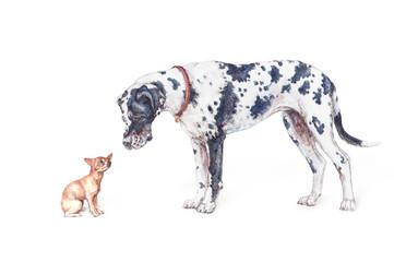 deutsche Dogge und Chihuahua auf weißem Hintergrund