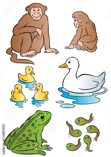 Mother & baby monkey, duck & frog