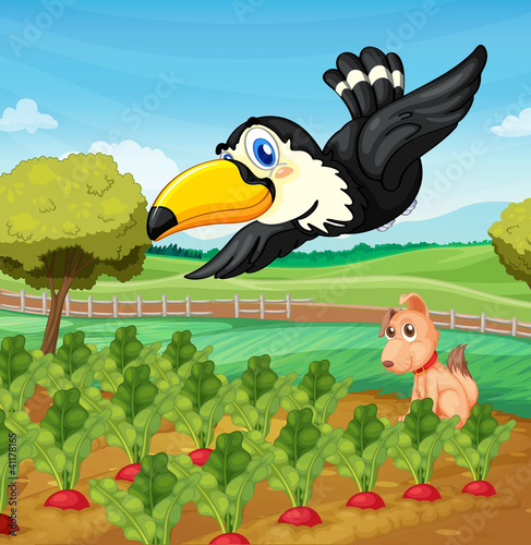Toucan over farm