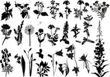 collection of wild flowers silhouettes