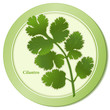 Cilantro Herb (Chinese Parsley), Mexican, Latin, Asian cooking.