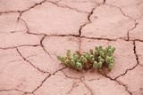Green plant growing on dry cracked desert ground