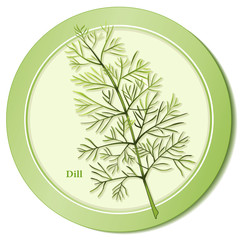 Dill Weed Herb, aromatic leaves for cooking, salad, pickles.
