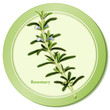 Rosemary Herb, cooking, Herbes de Provence, medicinal, perfumes