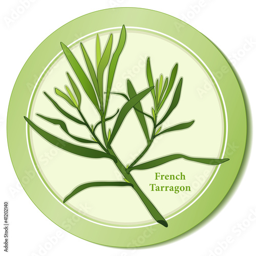 French Tarragon Herb, cooking, salads, Bernaise, Fines Herbes