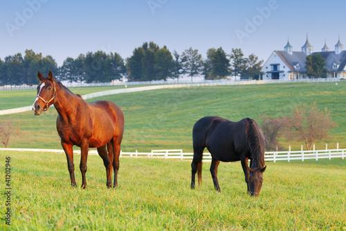 Foto op Plexiglas Paarden Horse Farm
