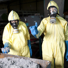 Experts analyzing infested material