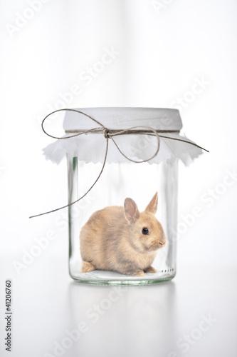 Kaninchen im Glas