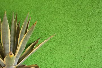 Parete verde e cactus