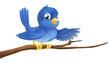 Bluebird sitting on  branch pointing