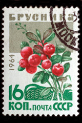 USSR - CIRCA 1964: Cowberry