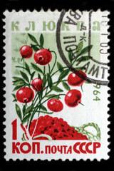 USSR - CIRCA 1964: Cranberry