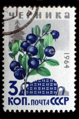 USSR - CIRCA 1964: Bilberry