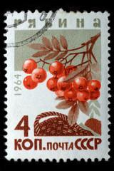 USSR - CIRCA 1964: Mountain ash