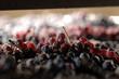 Amarone, appassimento dell'uva nera