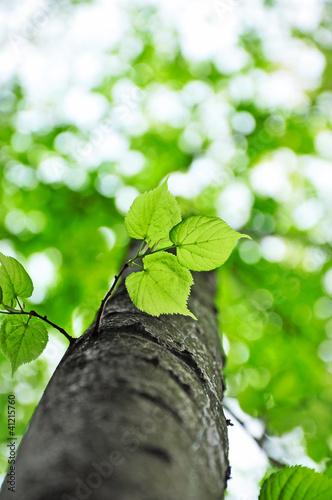 Spring tree, nature background